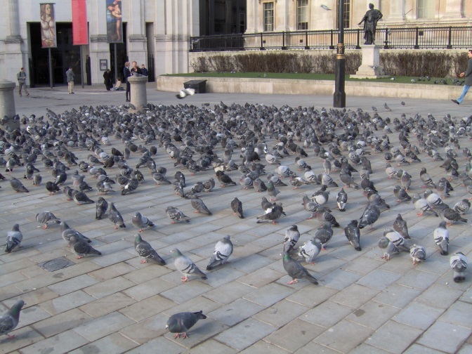 Some Days The Pigeon, Some Days The Statue………The Book Most Likely To Be Chosen By A Pigeon